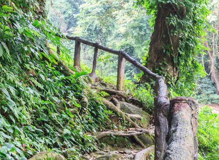 bridge nature: Wooden bridge nature trail in Phromlok waterfall,Thailand