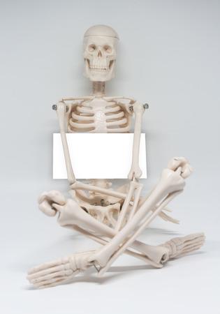 artificial skeleton on white background. Stock Photo