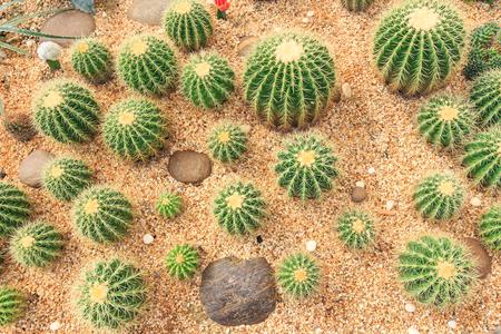 cactus garden green circle Imagens