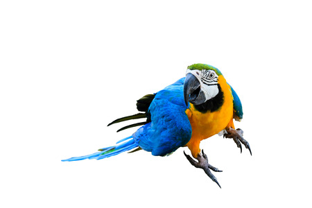 Beautiful parrot in the zoo isolated on white background Imagens