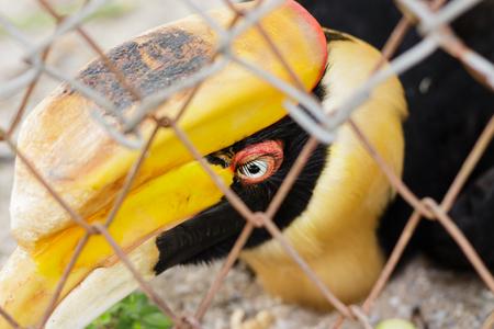 Hornbills in cage.