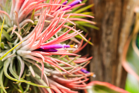 Close up of colorful Bromeliad plants in flower shop.