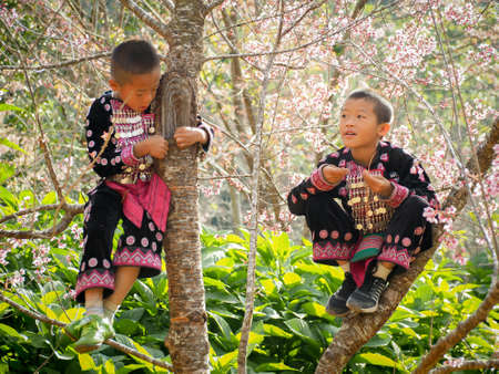 acquaint: CHIANG MAI, THAILAND - JANUARY 26, 2015: Hill tribes child on the tree. Hmong new year festival day. Editorial