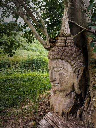 wrack: Ancient wooden Buddha statue head cracked and burned on bodhi tree background in hermitage at northern of thailand