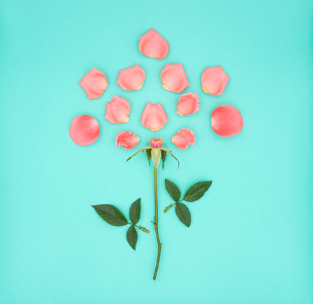 Top view (Flat-Lay) image of pink beautiful rose flower dismantling on green background, Pastel colors. Valentine day, love and wedding concept.