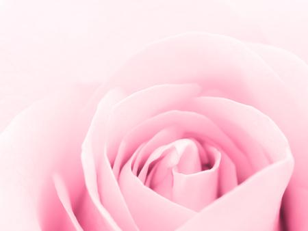 コピー スペースと美しいピンクのバラの花のクローズ アップのイメージ。バレンタインの日、愛と結婚式のコンセプト。