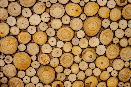 Texture of wooden log section used for background