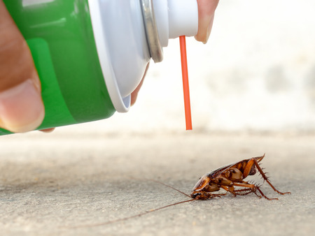Human hand spraying insecticide on dead cockroach. pest control, health and hygiene concept, copy space