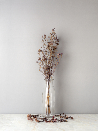Bouquet of dried and wilted brown Gypsophila flowers in glass bottle on matt marble floor and gray background Stockfoto