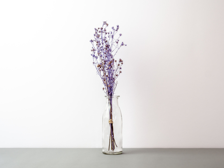 Bouquet of dried and wilted purple Gypsophila flowers in glass bottle on gray floor and white background