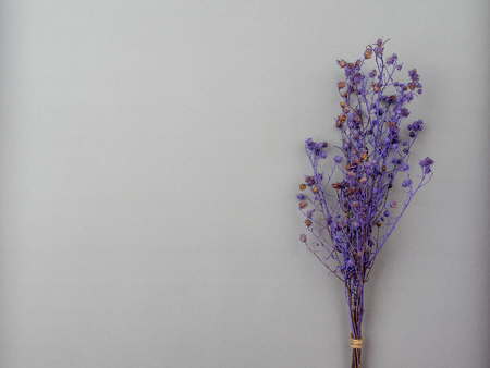 Top view bouquet of dried and wilted purple Gypsophila flowers on gray background with copy space