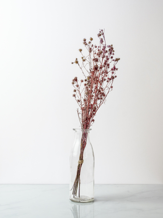 Bouquet of dried and wilted red Gypsophila flowers in glass bottle or marble floor and white background