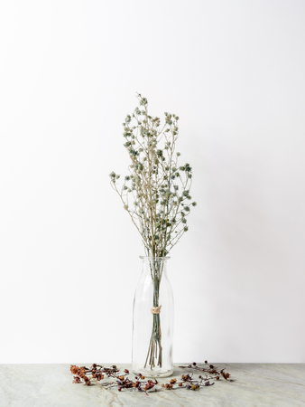 Bouquet of dried and wilted green Gypsophila flowers in glass bottle on matt marble floor and white background Stock Photo
