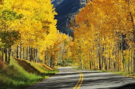 road in autumn tree scene in colorado