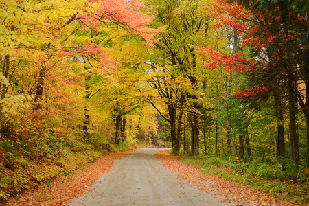 a local road in vermont with colorful autumn foliage