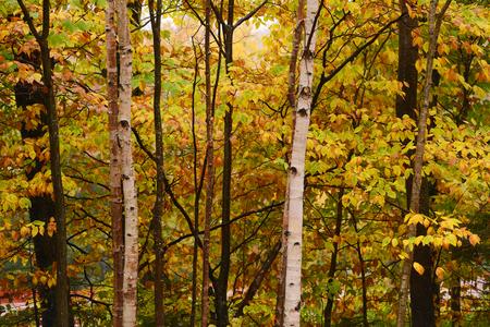 changing color: �rboles en Vermont est�n cambiando de color en oto�o