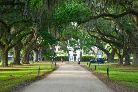 bonne: a row of old oak tree from a plantation near Charleston, south carolina Stock Photo