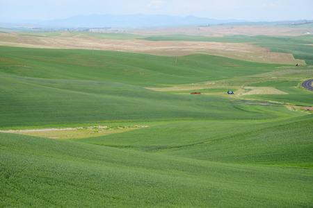 palouse: rolling hill of wheat farm land in palouse washington Stock Photo