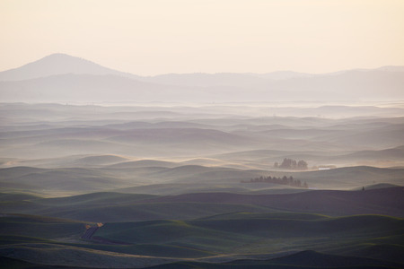 palouse: Green wheat hills of farming crop area in palouse washington with morning sunlight