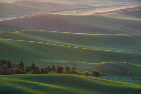 farming area: Green wheat hills of farming crop area in palouse washington with morning sunlight