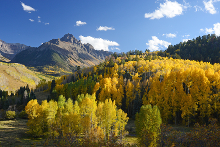 aspen in autumn at san juan mountains colorado