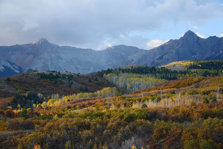 ouray: aspen in autumn at san juan mountains colorado