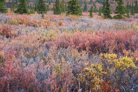colour in: color del otoño en la tundra Denali