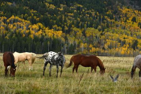 teton: horse with fall color in teton village