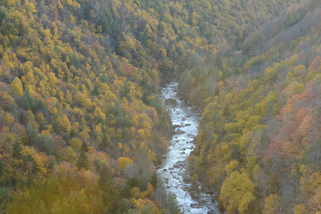 blackwater: blackwater fall state park in autumn Stock Photo