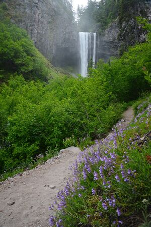 mount hood national forest: Tamanawas waterfall with mist in oregon