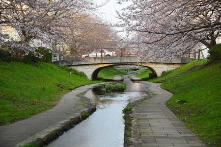 cherry blossom along a canal in yokohama Stock Photo