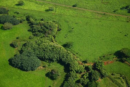 aerial view of forest in kauai
