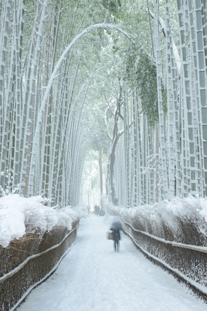 Arashiyama bamboo forest in winter 版權商用圖片