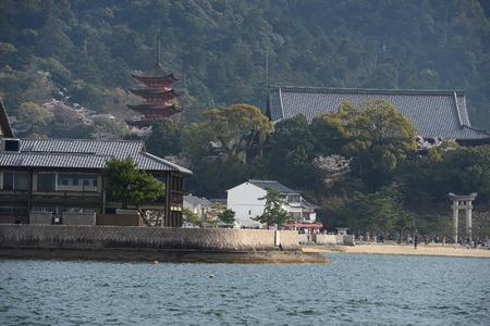 cherry blossom with pagoda at miyajima