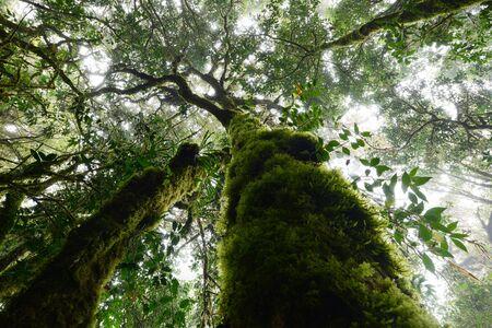 Thailand tropical jungle in Chiang Mai, Thailand Stock Photo