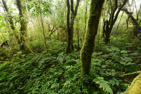 Thailand tropical jungle in Chiang Mai, Thailand Stock Photo - 95759529