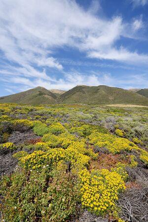 flower at big sur coast in california