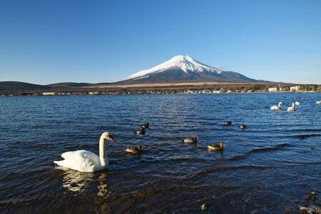 Mount Fuji with swans and blue sky in Winter