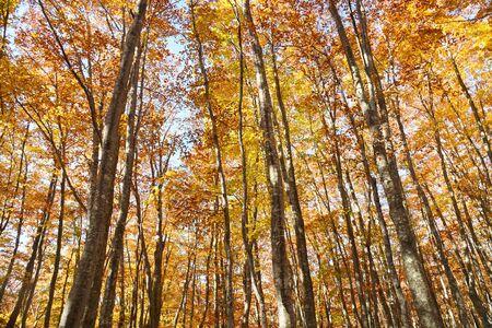 Autumn forest in Tohoku near Aomori, Japan