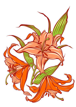 orange lilies Illustration