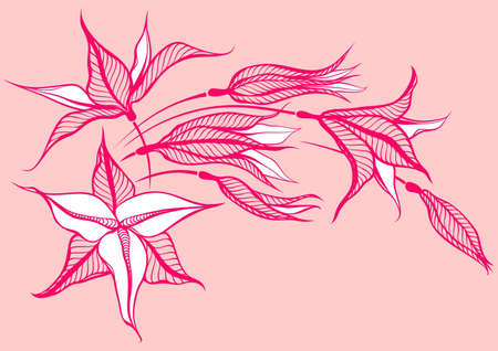 pink flower on pink background Illustration