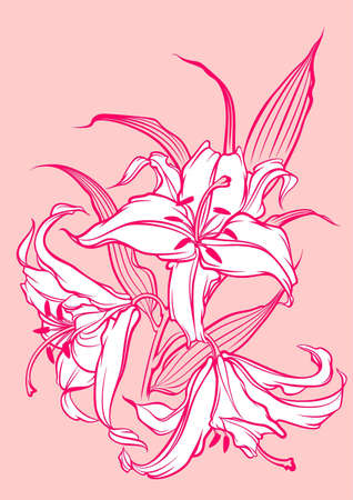 wite: wite lilies on pink background