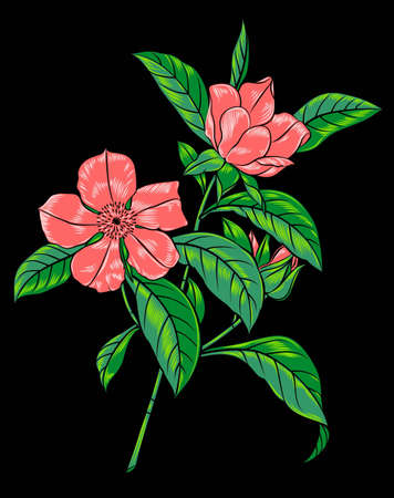 pink flowering branch on black background Illustration
