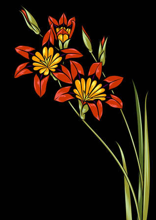 red flowering branch on black background Illustration