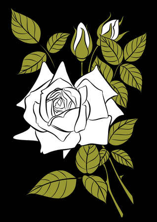 white rose  Stock Vector - 13763230