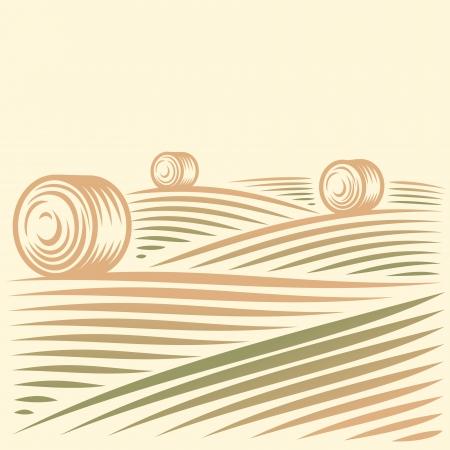 Paysage rural avec des champs et des meules de foin Banque d'images - 24027904