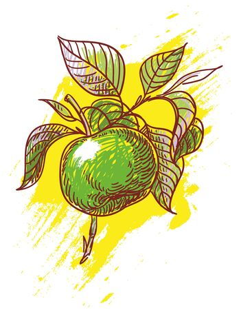 hand drawn illustration of green apple