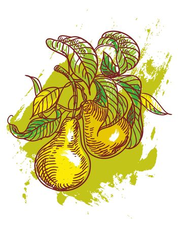 hand drawn illustration of ripe pears