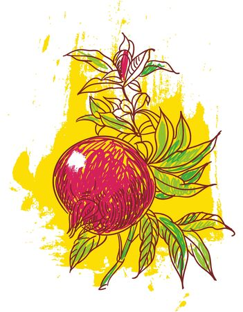 hand drawn illustration of ripe pomegrante
