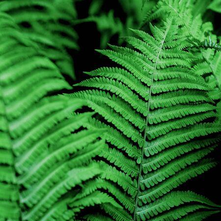 hebraism: Green. Leaves. Minimalism Details